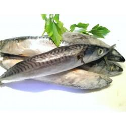 Aringhe intere - pescato -...